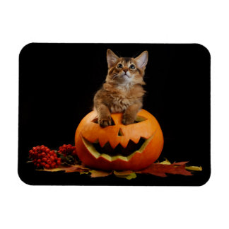 Scary Halloween Pumpkin And Somali Kitten Rectangular Photo Magnet