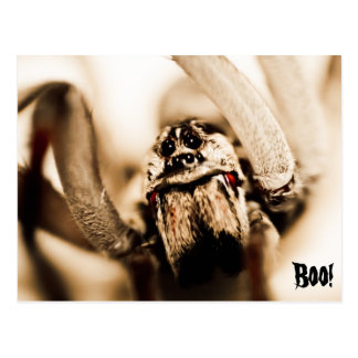 Scary Wolf Spider Postcard