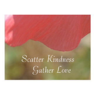 Scatter Kindness Pink Poppy Flower Postcard