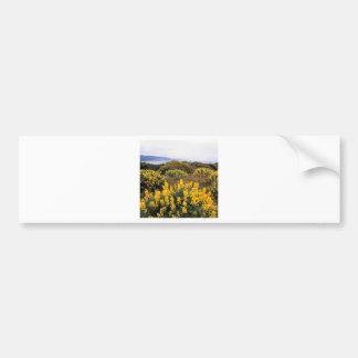 Scene Butter Lupine State Reserve California Bumper Stickers