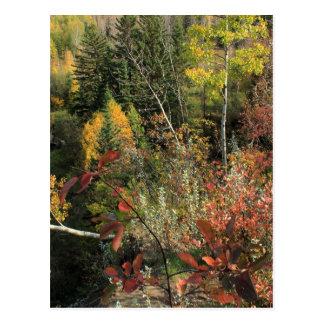 Scène canadienne d'automne de forêt cartes postales