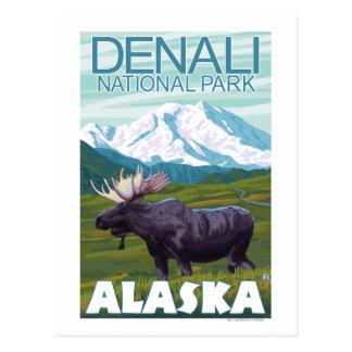 Scène d'orignaux - parc national de Denali, Alaska Cartes Postales