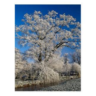 Scène givrée d'hiver, Angleterre Cartes Postales