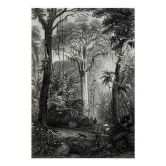 Scene in a Brazilian Forest engraved by Poster