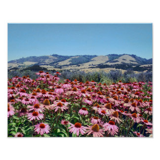 Scenic Field of Pink Cone Flowers Poster