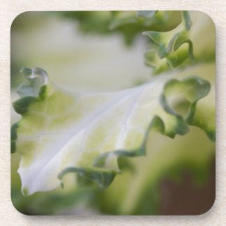 scenic leaf coaster
