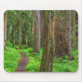Scenic of old growth forest mouse pad