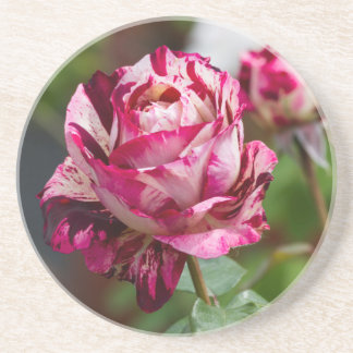 scenic roses drink coaster