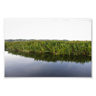 Scenic Tropical Swamp Lily Photo Print