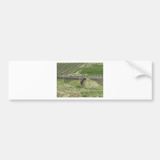 Scenic view of rolling hillside with vineyards bumper sticker