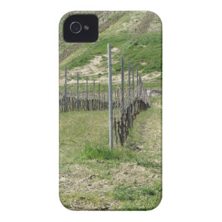 Scenic view of rolling hillside with vineyards Case-Mate iPhone 4 case