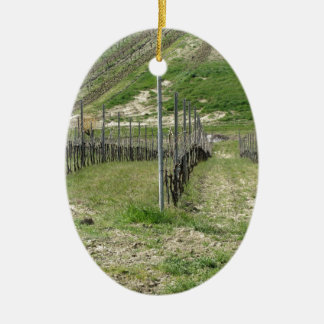 Scenic view of rolling hillside with vineyards ceramic ornament