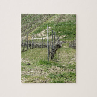 Scenic view of rolling hillside with vineyards jigsaw puzzle