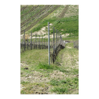 Scenic view of rolling hillside with vineyards stationery