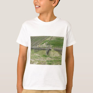 Scenic view of rolling hillside with vineyards T-Shirt