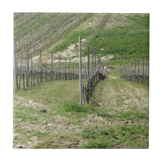 Scenic view of rolling hillside with vineyards tile