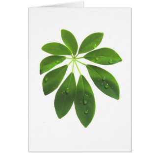 Schefflera note card