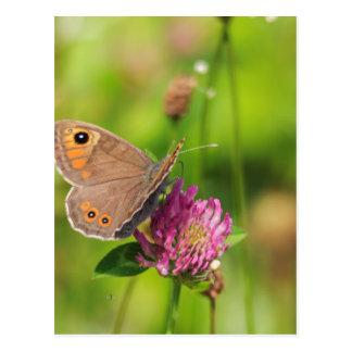 Schmetterling Postcard