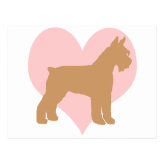 Schnauzer and Pink Heart Postcard