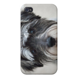 Schnauzer Dog iPhone Case iPhone 4 Cover