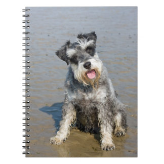 Schnauzer miniature dog cute beautiful photo beach spiral notebook