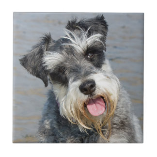 Schnauzer miniature dog cute beautiful photo tile