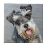 Schnauzer miniature dog cute beautiful photo tiles