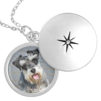 Schnauzer miniature dog cute photo portrait, gift silver plated necklace
