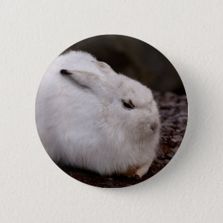Schneehase Cute Zoo Animal Animal World Fur Hare 2 Inch Round Button