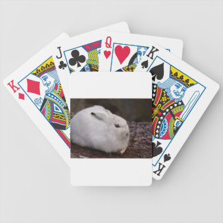 Schneehase Cute Zoo Animal Animal World Fur Hare Bicycle Playing Cards