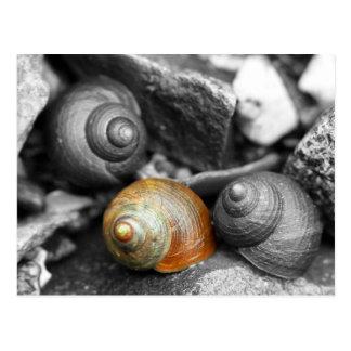 Schoodic Snails II Postcard
