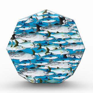 School of Atlantic Surf Fish in blue