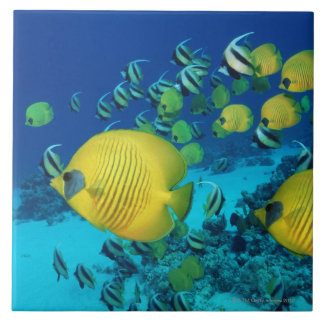 School of Butterfly Fish Swimming on the Seabed Tile