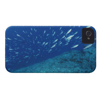 School of Fish 6 iPhone 4 Case-Mate Case