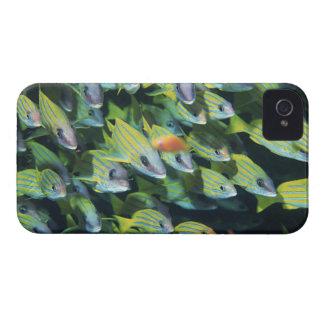 School of Fish 7 Case-Mate iPhone 4 Case