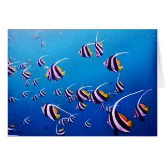 School of Fish, Banda Neira Note Card