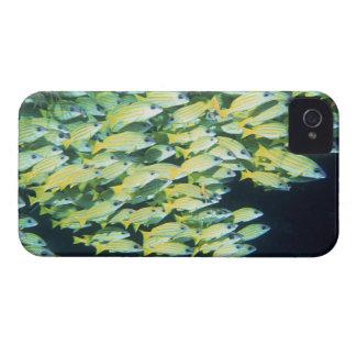 School of Fish iPhone 4 Case-Mate Cases