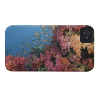 Schooling Fairy Basslets 2 iPhone 4 Case-Mate Cases