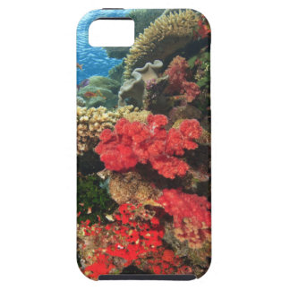 schooling Fairy Basslets  (Pseudanthias 2 iPhone 5 Cover