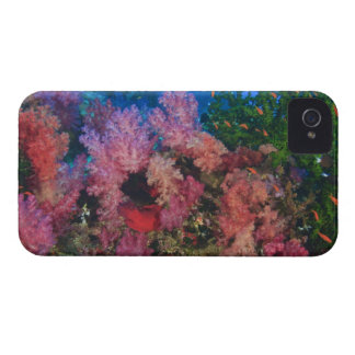 schooling Fairy Basslets  (Pseudanthias 4 iPhone 4 Covers