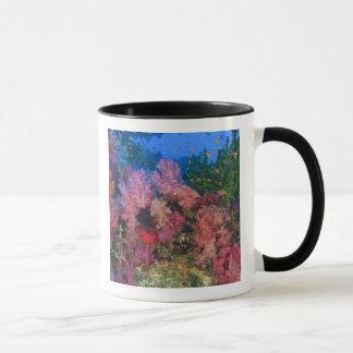 schooling Fairy Basslets  (Pseudanthias 4 Mug
