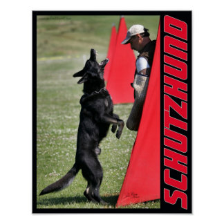 Schutzhund German Shepherd Dog Poster