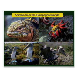 Science,  animals from the Galapagos Poster