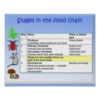 Science Food chain stages Posters