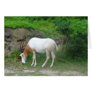 Scimitar Oryx #2 Card