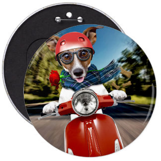 Scooter dog ,jack russell 6 inch round button