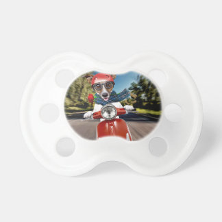 Scooter dog ,jack russell pacifier