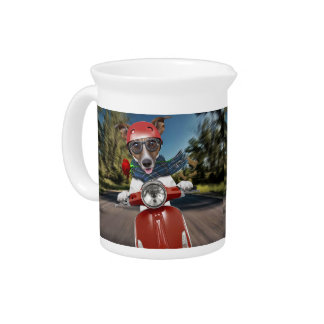 Scooter dog ,jack russell pitcher