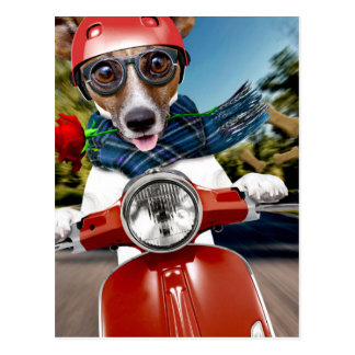 Scooter dog ,jack russell postcard