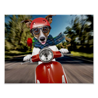 Scooter dog ,jack russell poster